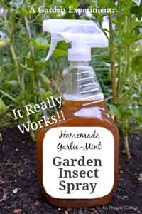 Homemade Garlic-Mint Garden Insect Spray